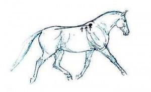 paard OPGERICHT
